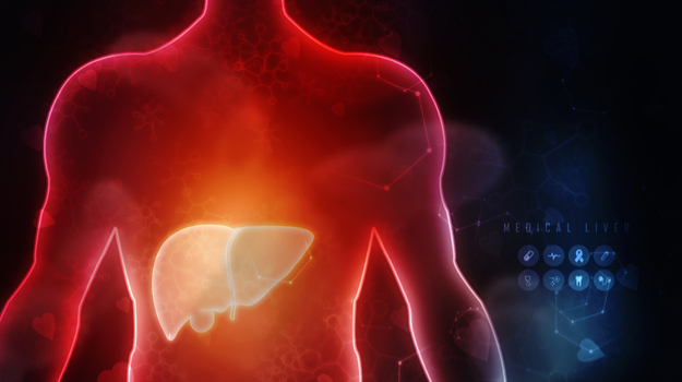 Illustration of liver in transparent human torso