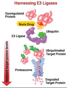 targetprotein