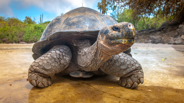 "The Genome of Giant Tortoise ""Lonesome George"" Provides Clues to Longevity and Disease Resistance"
