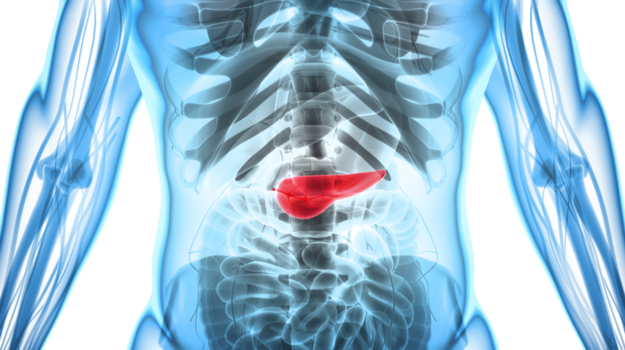 Transparent Rendering of Human Body with Pancreas Highlighted