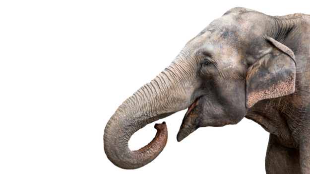 "Elephant ""Zombie Gene"" May Explain Why They Rarely Get Cancer"