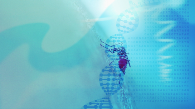 Promising Early-Stage Results for Novel Malaria Therapeutics