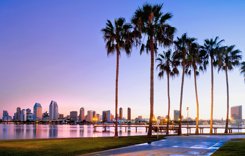San Diego City Skyline and palm trees
